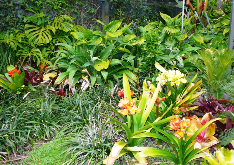 Sub tropical planting natural gardens for New zealand garden designs ideas